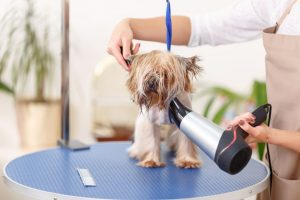 salon in Strongsville, Does Your Dog Go to the Salon More than You Do?